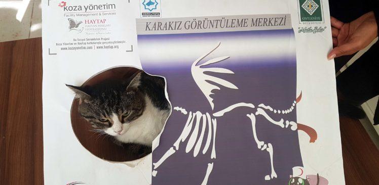 Depresyonu yenmesini sağlayan kedisine şifa arıyor