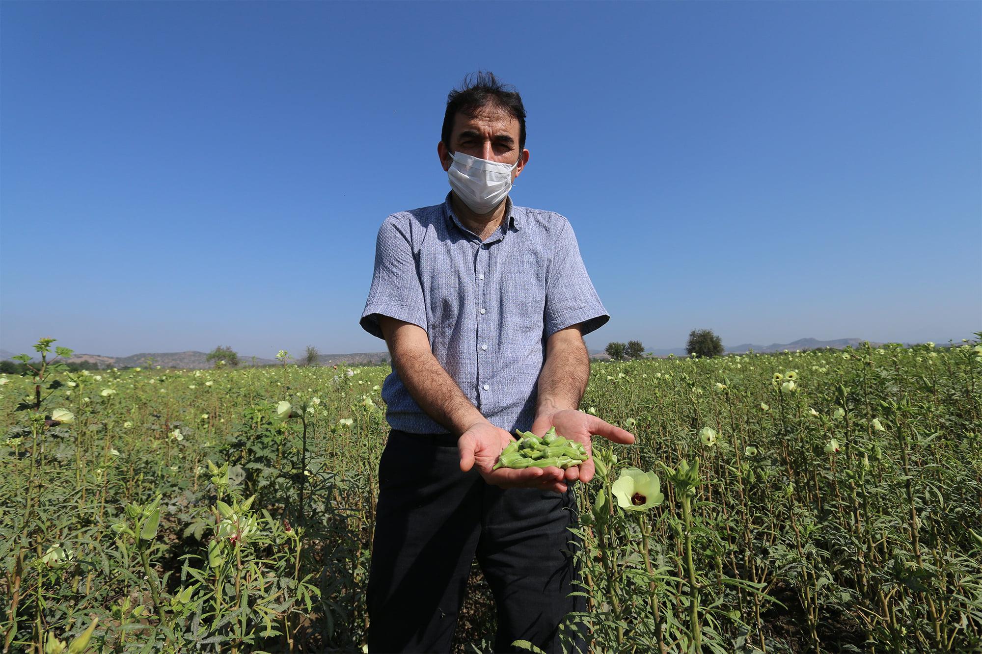 Bulut,  Bamya Üretiminde Türkiye 4'üncüsü