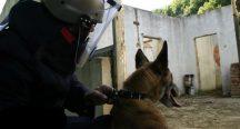Özel güvenlik görev köpeklerinin zorlu sınavı